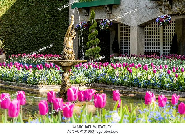 Tulip bed and fountain, the Italian Garden, Butchart Gardens, Brentwood Bay, near Victoria, British Columbia, Canada