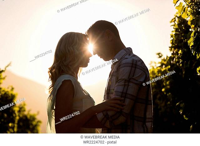 Couple embracing and being about to kiss between grapevine