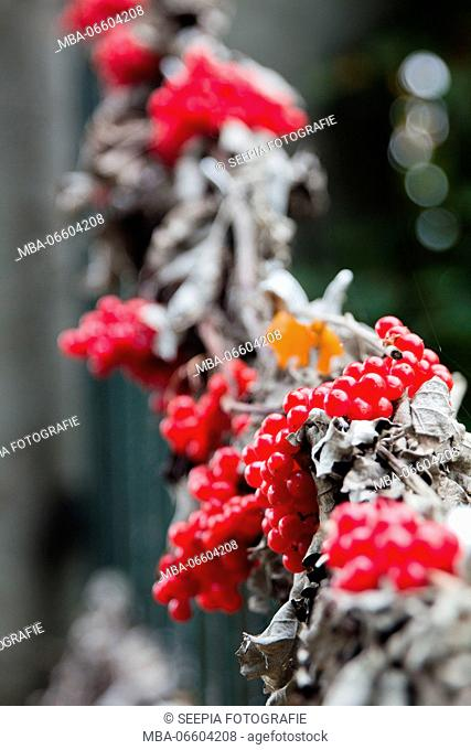 Garland with red berries