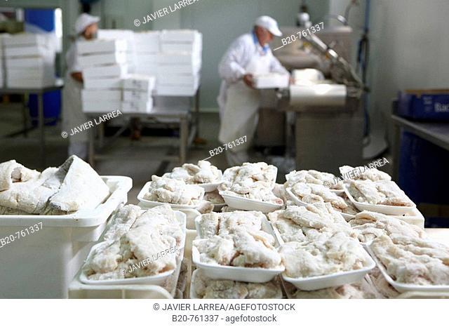 Manipulation of salt cod, refrigerated and frozen salt cod distribution