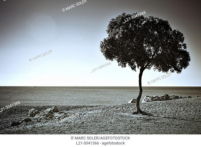 Lonely tree by the coast. Catalonia, Spain