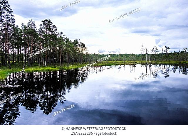 The Viru Bog in Lahemaa National Park, Estonia