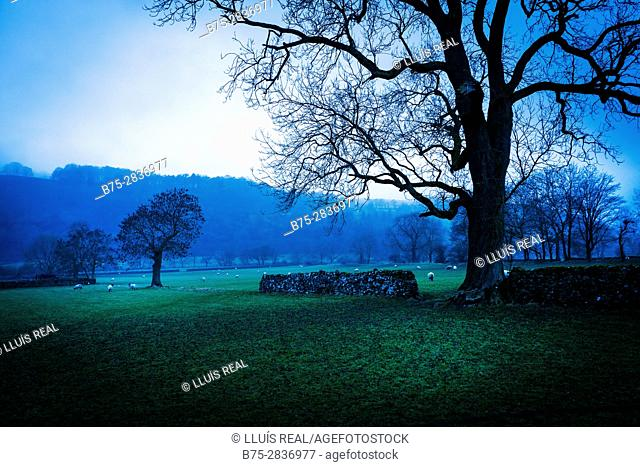 Rural landscape at sunset with trees an autumn day. Buckden, Skipton, Yorkshire Dales, North Yorkshire, England, UK