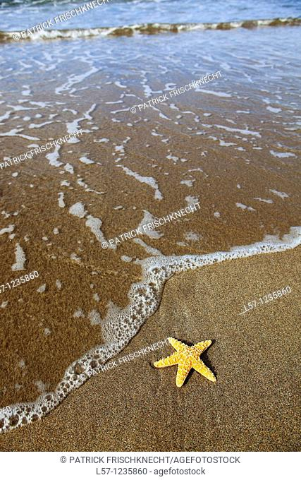 sea star on sandy beach, Sutherland, Scotland