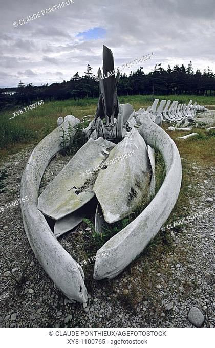 Whale-Skeleton, Anticosti, Québec, Canada