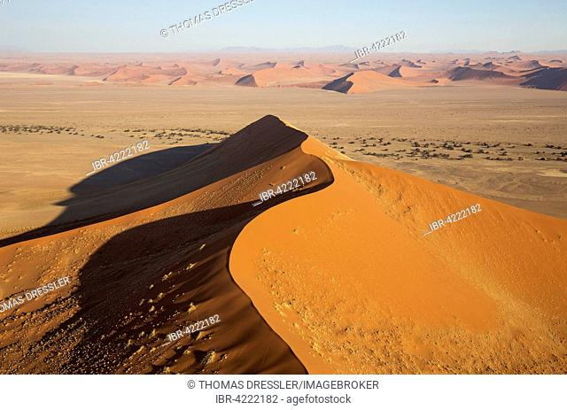 Sand dunes in the Namib Desert, camel thorn trees (Acacia erioloba) growing along the dry riverbed of the Tsauchab river, in the evening, aerial view