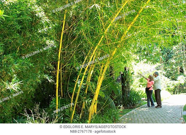Bamboo forest Venezuela