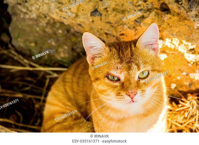 very sad cat with big green eyes