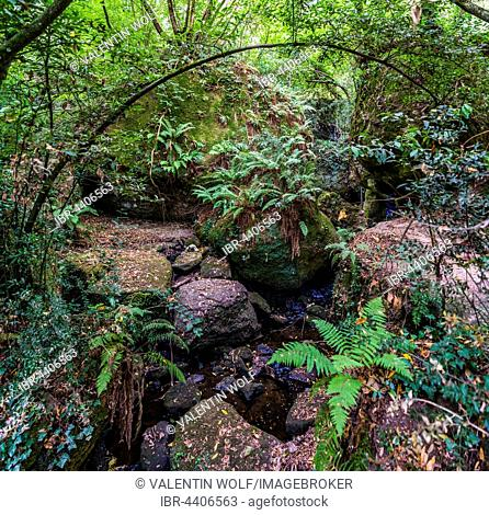 Forest with ferns by river, Sacro Bosco, Park of the Monsters, Bomarzo, Lazio, Italy