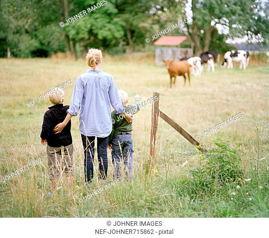 Mother and children visiting grazing cows, Sweden
