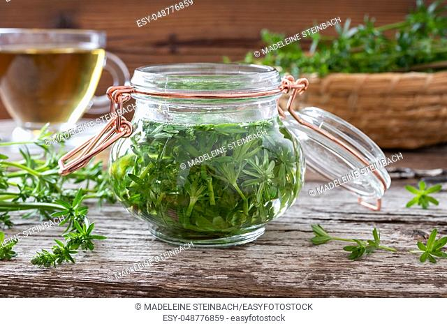 Preparation of homemade tincture from fresh bedstraw plant