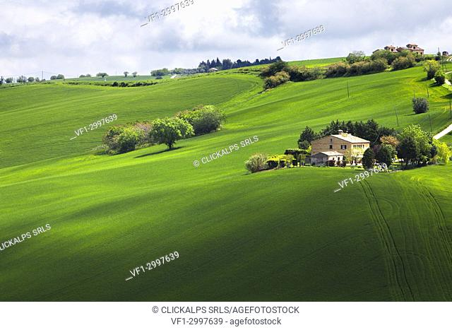 Agricultural fields in the Marche's hills, Morrovalle village, Macerata district, Marches, Italy
