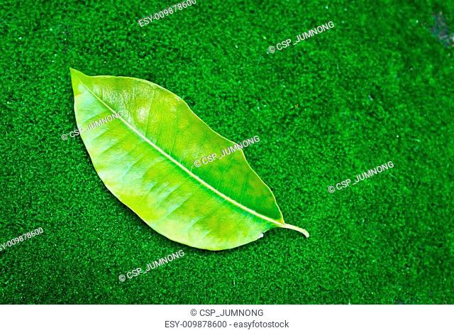 tree leaf on green moss background