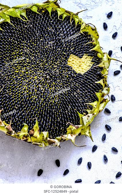 The ripe sunflower and sunflower seeds fell out like a heart