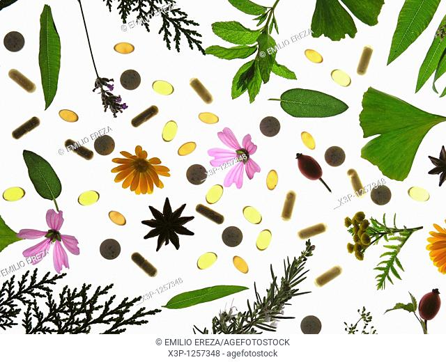Medicinal plant  Capsules and pills