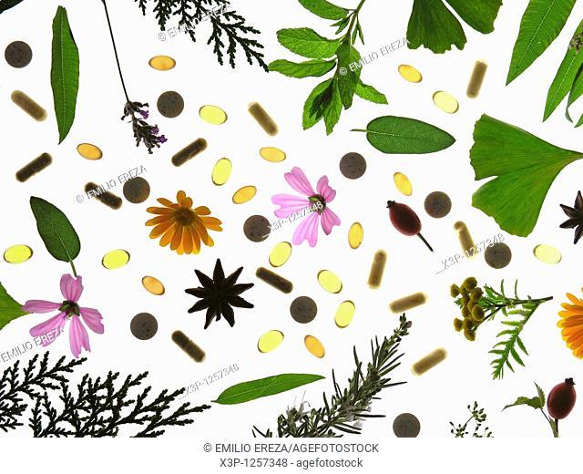 Medicinal plant  Capsules and pills