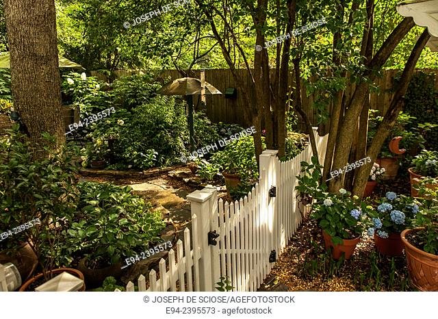 A white picket fence and gate in a garden with hydrangeas and trees.Georgia USA