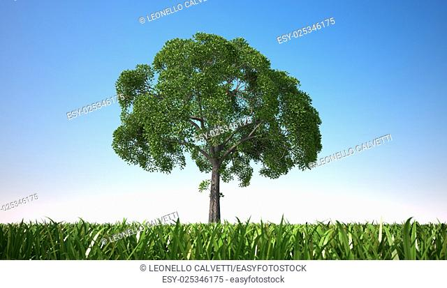 Isolated close up of a tree in a grass field, centered in the scene, viewed from a low point of view, with close grass