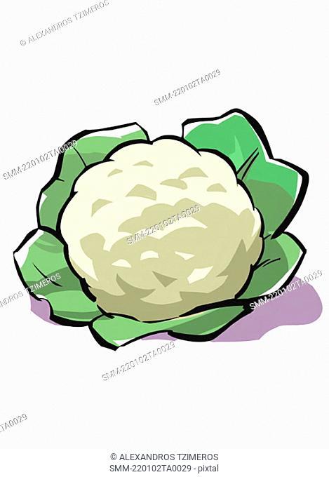 A head of cauliflower