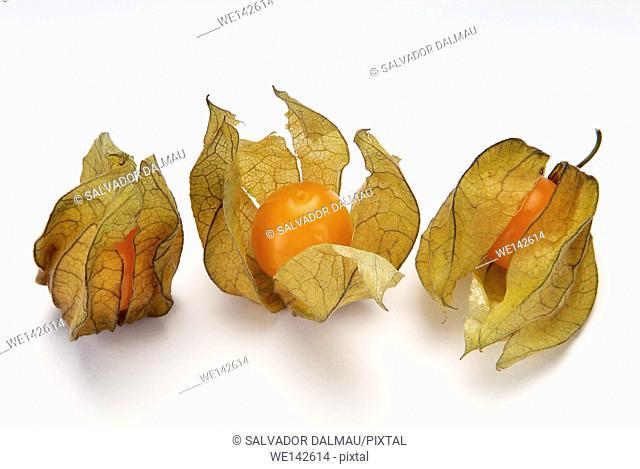 photography studio,creative fruit,physalis tropical fruit, location girona,catalonia,spain,europe,