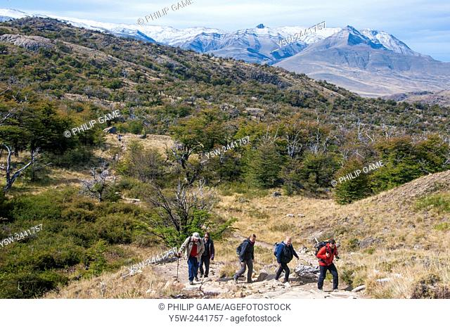 Hikers moving through nothofagus beech woodland forest in Los Glaciares National Park, El Chalten, Patagonia, Argentina