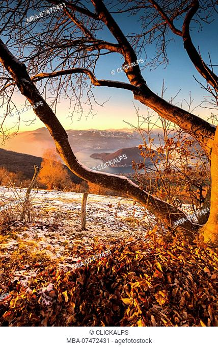 Natural frame at sunset, Montisola, Brescia province, Lombardy district, Italy