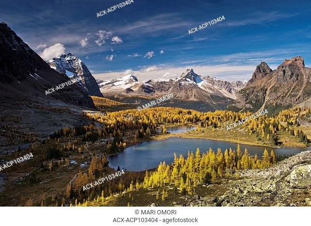 Golden Larches surround Hungabee Lake in Yoho National Park