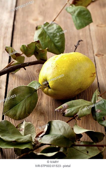 Quince Fruit And Dry Leaf