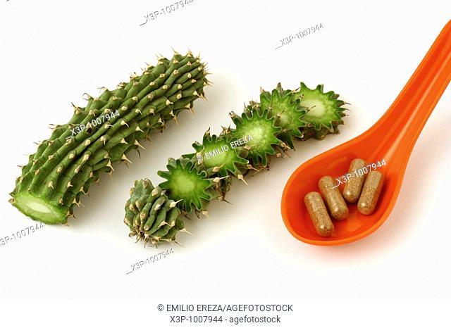 Cápsulas de Hoodia Hoodia gordonii  PLanta originaria de Sudáfrica, utilizada tradicionalmente por los bosquimanos como supresor del apetito  Suculenta de la...