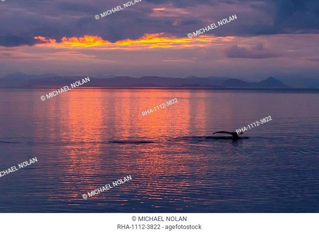 Humpback whale (Megaptera novaeangliae), flukes-up dive at sunset in Frederick Sound, Southeast Alaska, United States of America, North America