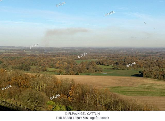 View of countryside in autumn, with some trees in autumn leaves and others leafless and distant bonfire, with Red Kites (Milvus milvus) in flight