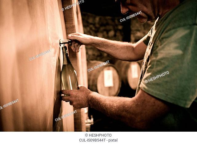 Winemaker filling wine bottle from cellar barrel