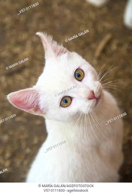 Lovely white kitten looking at the camera