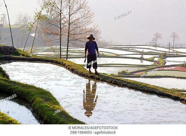 China , Yunnan province , Hani people, Yuanyang , Azheke village, rice terraces , peasant , farmer