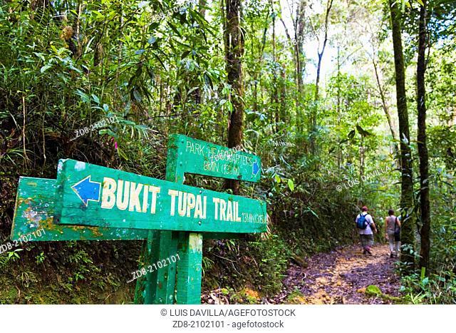 kinabalu national park. sabah province.malaysia