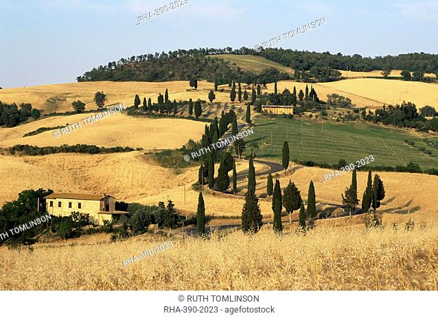 Landscape with winding road lined with cypress trees, Monticchiello, near Pienza, Tuscany, Italy, Europe