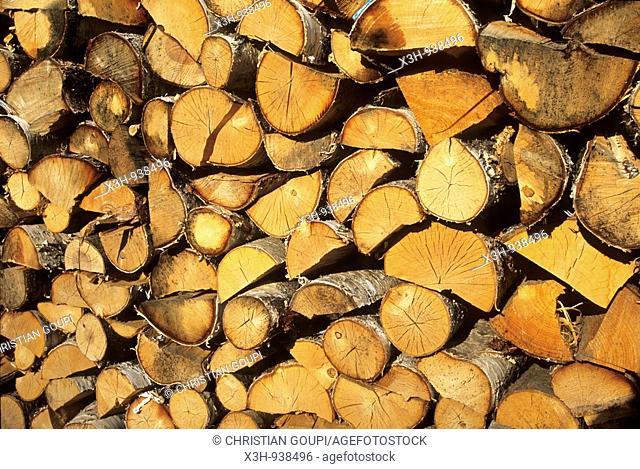 buches de bois de bouleau,region de Saare,Estonie,pays balte,europe du nord