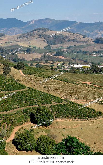 Coffee plantation around the city stretch is part of the Path of Faith connecting the cities of Águas da Prata to Aparecida, Andradas, Minas Gerais, Brazil, 09