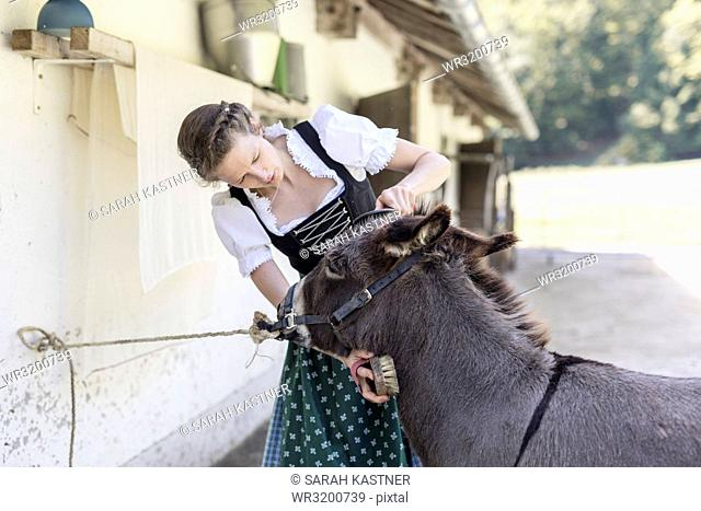 Countrywoman with dirndl brushes a donkey