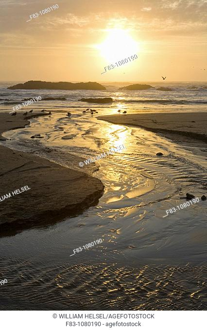 USA, Oregon, Lincoln County, Seal Rock State Recreation Area, beach with creek flowing across, gulls and rocks at sunset, vertical, August