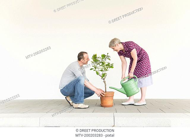 Mature couple caring for little tree, smiling