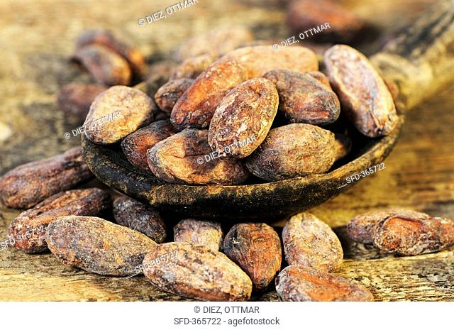 Cocoa beans on and beside wooden spoon close-up
