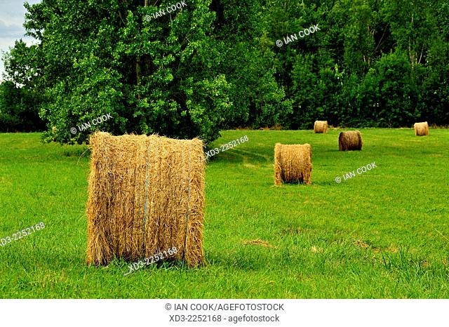 Hay bales, Lot-et-Garonne Department, Aquitaine, France