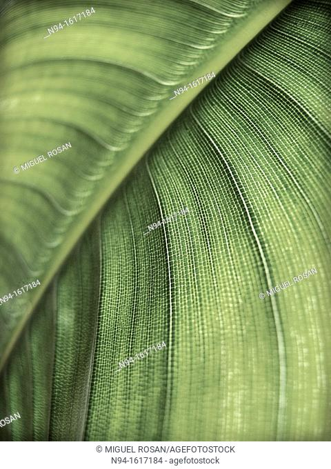 First lever of the texture of the leaves