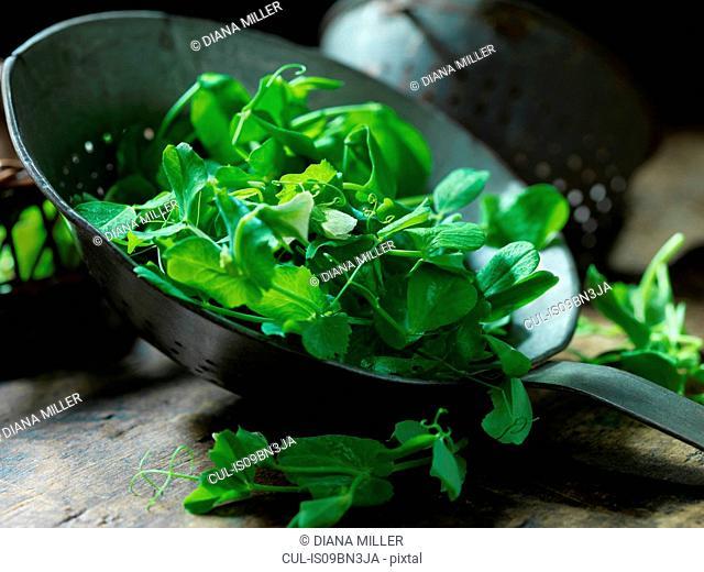 Fresh pea shoots