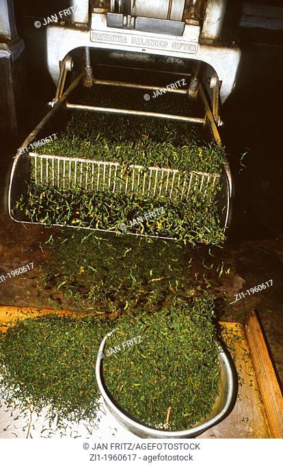 gifter machine at tea factory in Darjeeling, India