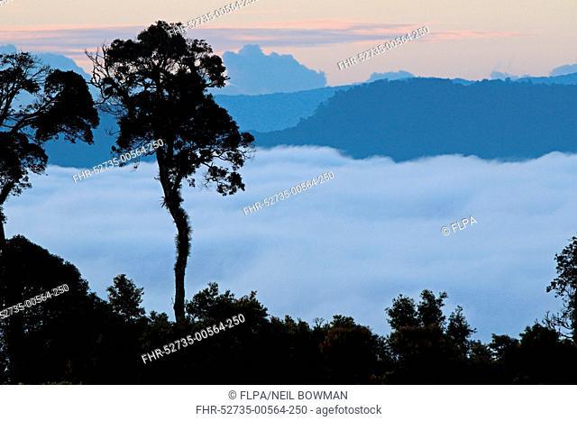 View over montane rainforest habitat with low cloud in valley at dawn, Kerinci Seblat N.P., Sumatra, Greater Sunda Islands, Indonesia, June