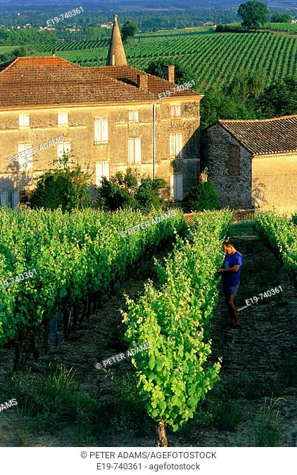 Château and vineyards, Gaillac, Tarn, Midi-Pyrenees, France