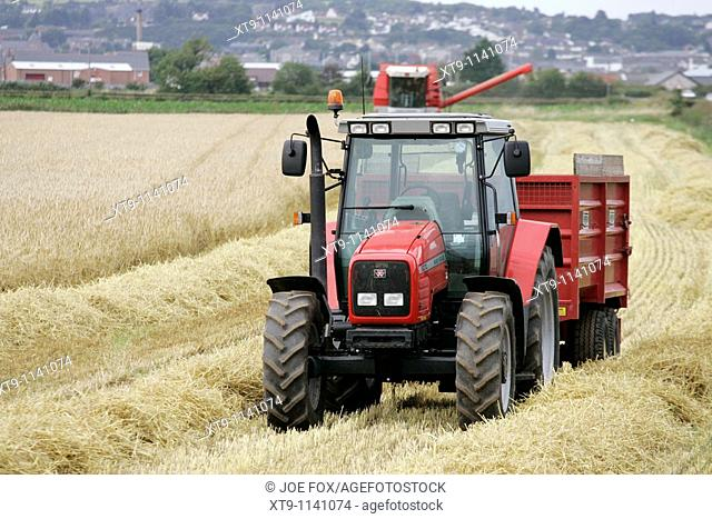 Massey Ferguson red tractor and trailer in wheat field outside newtownards, county down, northern ireland