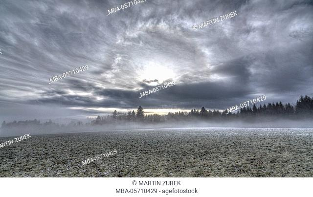 Fog in winter, field, clouds, sun, HDR, wood, spruces, firs, dramatic